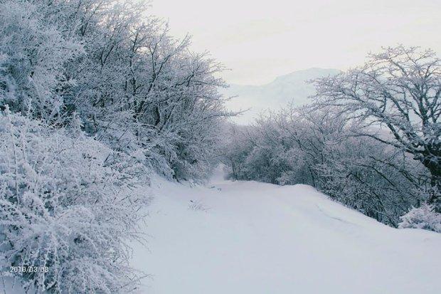 مازندران مهیای بهار در زمستان