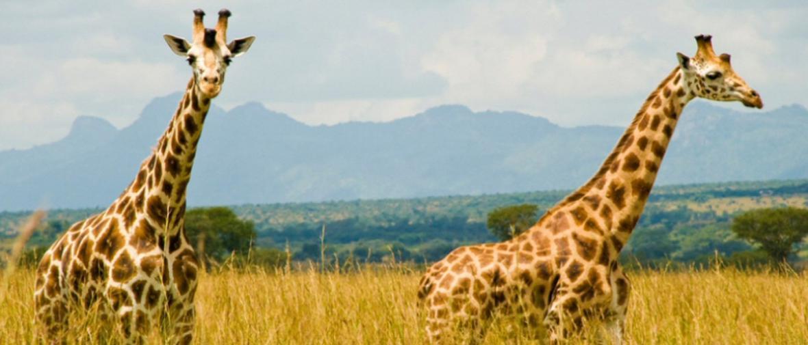 پارک ملی کیدپو، مرواریدی پنهان در اوگاندا