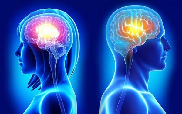 5 تفاوت بین مغز زنان و مردان