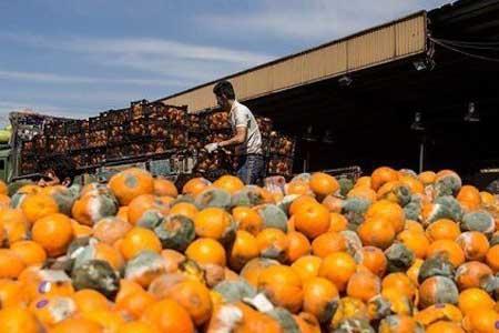 قیمت خرید پرتقال شب عید چند؟